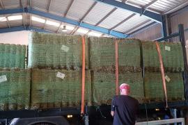 El Govern balear ya distribuye las balas de alfalfa de la campaña de ayuda contra la sequía