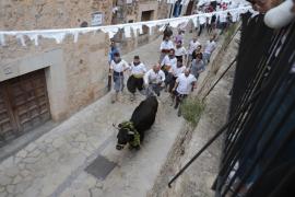Fornalutx celebra su tradicional 'baixada de bou'