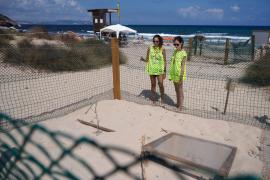 Nacen cinco tortugas de los huevos depositados en verano en Ibiza