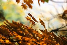 ¿Qué tiempo hará este otoño?