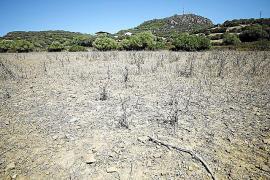 El Govern declara ahora la alerta por sequía agraria