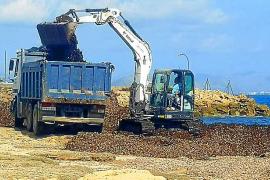 La mayoría de los Baleares rechaza la retirada de algas en parques naturales