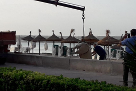 Retiran la vaca hallada muerta en la Playa de Palma
