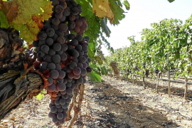 Alerta entre los productores de vino y queso por la posible bajada de exportaciones a EEUU