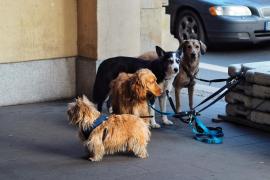 El Govern promoverá el «sacrificio cero» de mascotas abandonadas