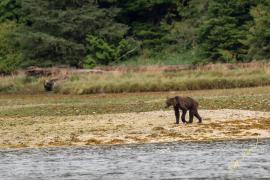 La desoladora imagen de unos osos muertos de hambre: ¿El fin de algunas especies?