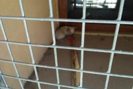 Rescatan a un gatito atrapado en un ventanal del instituto Joan Alcover