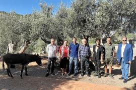 Autoridades y sector olivarero presentaron la campaña