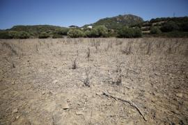 Los anticipos de ayudas europeas a agricultores y ganaderos se repartirán a partir del miércoles