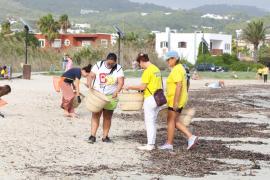 La limpieza de la playa de Talamanca, en imágenes (Fotos: Irene Arango).