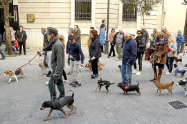 La nueva ordenanza de animales de Cort agilizará las inspecciones en los hogares