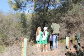 Estudiantes plantan 70 pinos y acebuches en el Bosque de Bellver