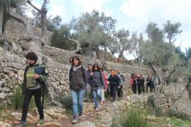 El Constitucional avala la Ley de Caminos impulsada por el Consell de Mallorca