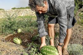 La superficie dedicada a la agricultura ecológica aumenta un 9,7 % en un año en Baleares
