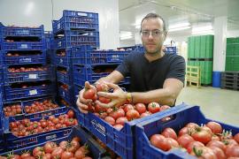 La producción de tomates de 'ramellet' crece un 17 %