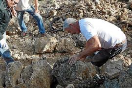 El Consell de Mallorca rectifica y dará ayudas a las sociedades para restaurar los 'marges'