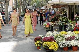 Las floristerías de Palma, preparadas para Tots Sants