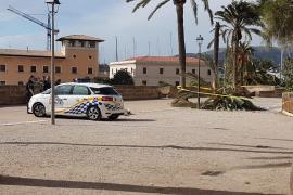 Cae una palmera sobre una niña en Palma
