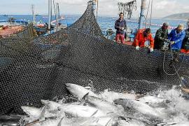 Palma acogerá una cumbre internacional sobre pesca