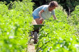 Más de 430 jóvenes 'pagesos' han entrado en el sector los últimos tres años y medio
