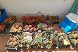 La Policía Local de Formentera interpone 257 denuncias por venta ambulante