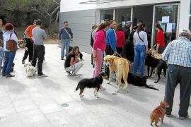 El abandono de animales domésticos aumenta un 14% durante el primer trimestre de 2012