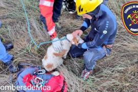 Rescatan a un perro de un coche que se había precipitado en un torrente