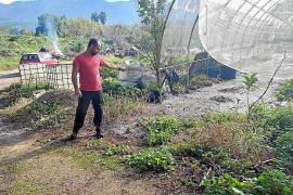 Un vertido de la depuradora inunda más de 2.500 m² de huertos con restos fecales en Sóller