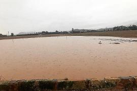 El temporal provocará el retraso en la recogida de patatas 'tardanes' de sa Pobla
