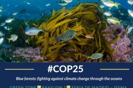 Oceana reclama la protección de los «bosques azules» marinos