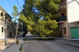 Caída de árboles en Consell
