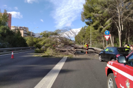 Las incidencias del viento en Mallorca