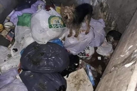 Rescatan a once perros abandonados en dos contenedores soterrados