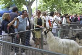 Miles de personas visitan la Fira de Santa María que este año competía con la de Son Ferriol