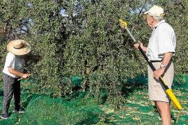 Temporada récord para el aceite de Eivissa
