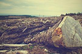 Aumentan las áreas deforestadas del Amazonas, que suponen casi el tamaño de Puerto Rico