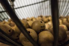 10 consejos para evitar que te engañen con la lotería de Navidad