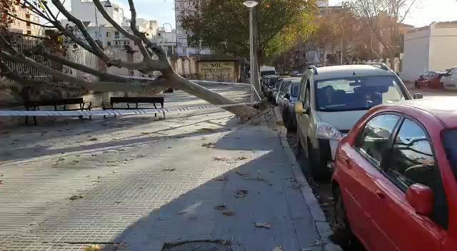 El fuerte viento en Mallorca provoca multitud de incidentes