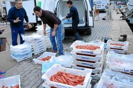 El sector pesquero confía en las buenas ventas de gamba roja de Sóller estas fiestas
