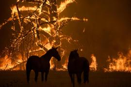 """Australia combate centenares de incendios en condiciones """"catastróficas"""""""