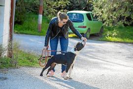 Los voluntarios no se olvidan de los perros de sa Coma por Navidad