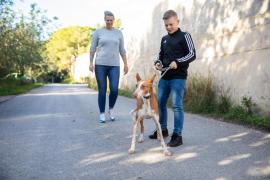 Los paseos con los perros de sa Coma, en imágenes .