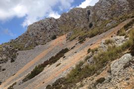 Protección para las 'rossegueres' de Mallorca