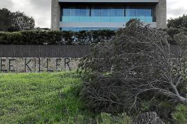 Nueva tala de pinos en la zona de dominio público del chalet ya denunciado en Son Verí