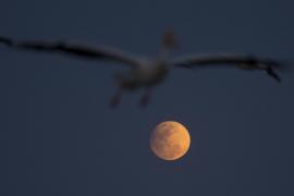 El eclipse penumbral de Luna de este viernes se podrá ver desde España
