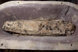 Estudio de la momia de Pere el Gran