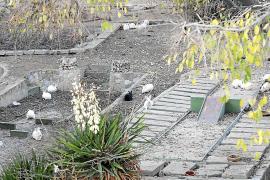 Cort no actuará ante los conejos del minigolf si no hay denuncia