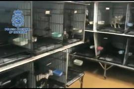 La Policía Nacional localiza a 270 perros hacinados en un criadero ilegal
