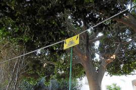 Vecinos de Cala Llamp electrifican sus jardines para que las cabras no los invadan