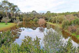 La limpieza del torrente de Pina deja inundadas fincas de cultivo